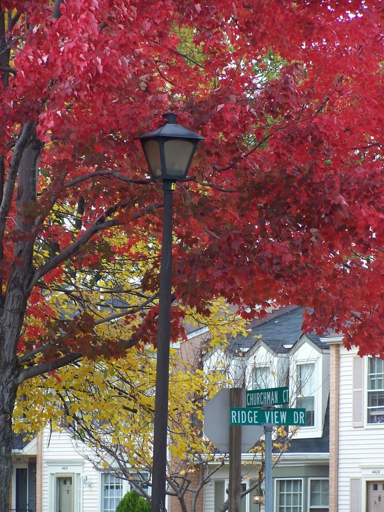 Fall on Ridge View Drive