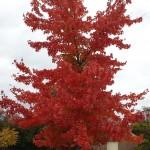Beautiful Fall colors in Loftridge
