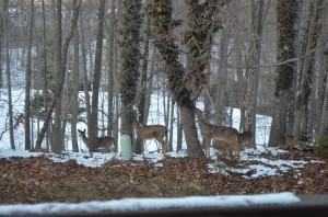 Deer in Loftridge