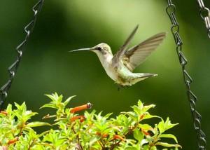 Birds in Loftridge