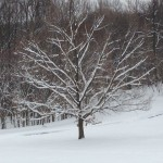 Winter in Loftridge